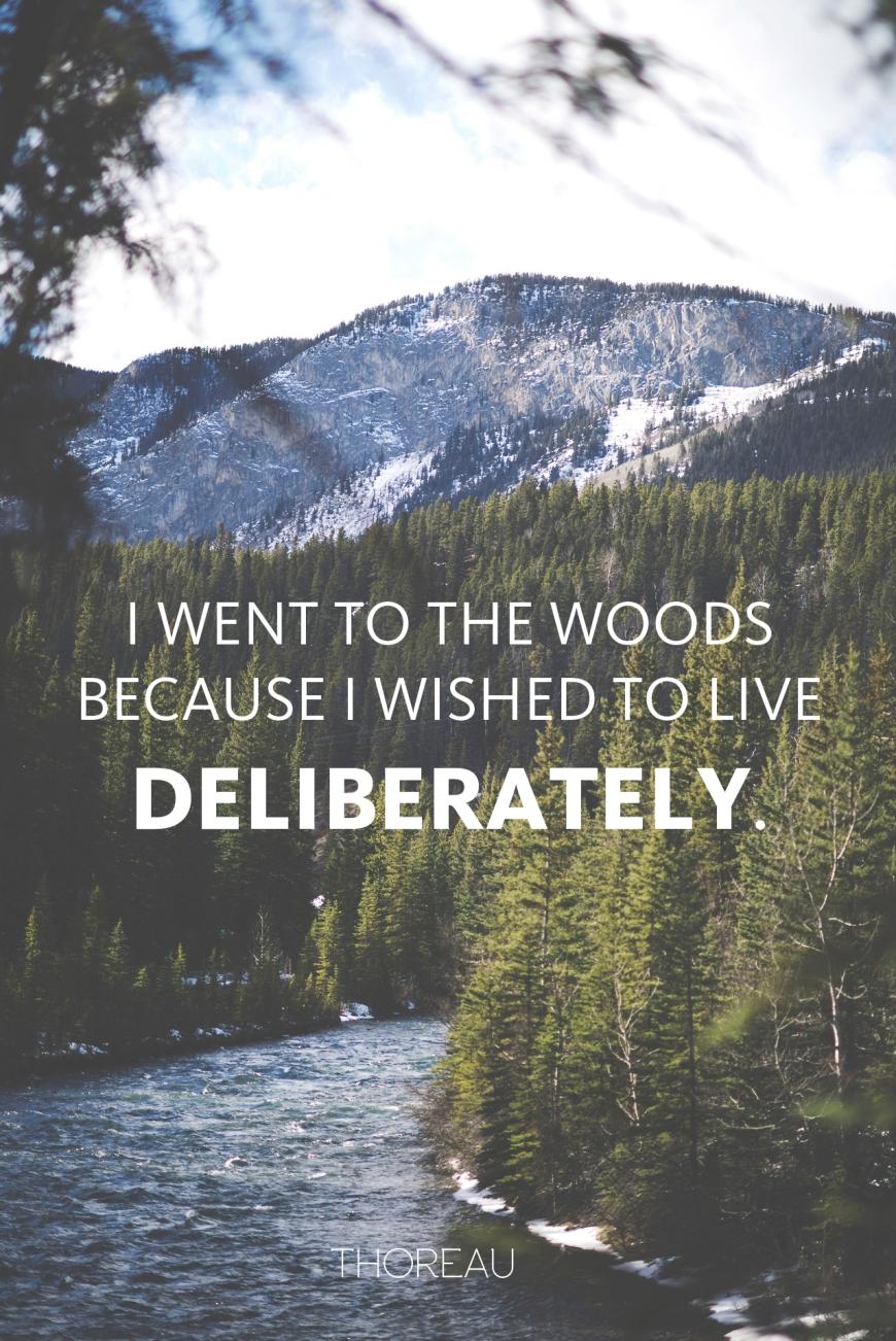 iwenttothewoods