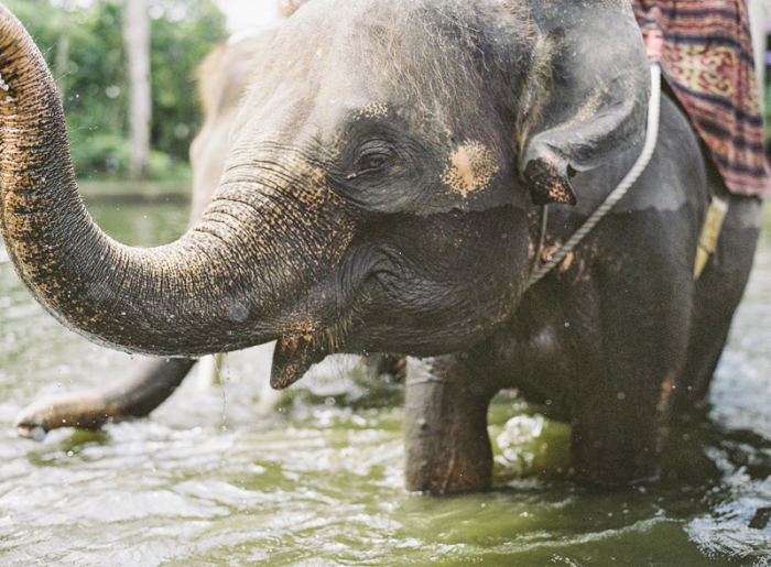 Ubud-Bali-Elephant-Camp-700x515