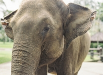 Ubud-Elephant-Camp-700x515